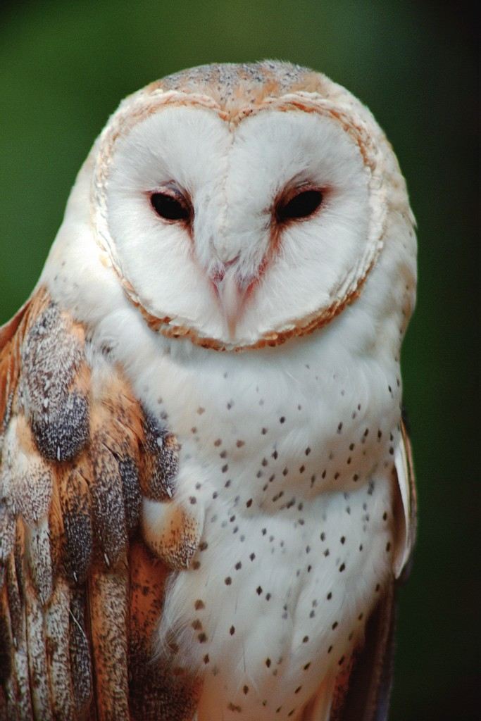 Spiritual Meaning of the Magnificent Owl – Jules Organic Living